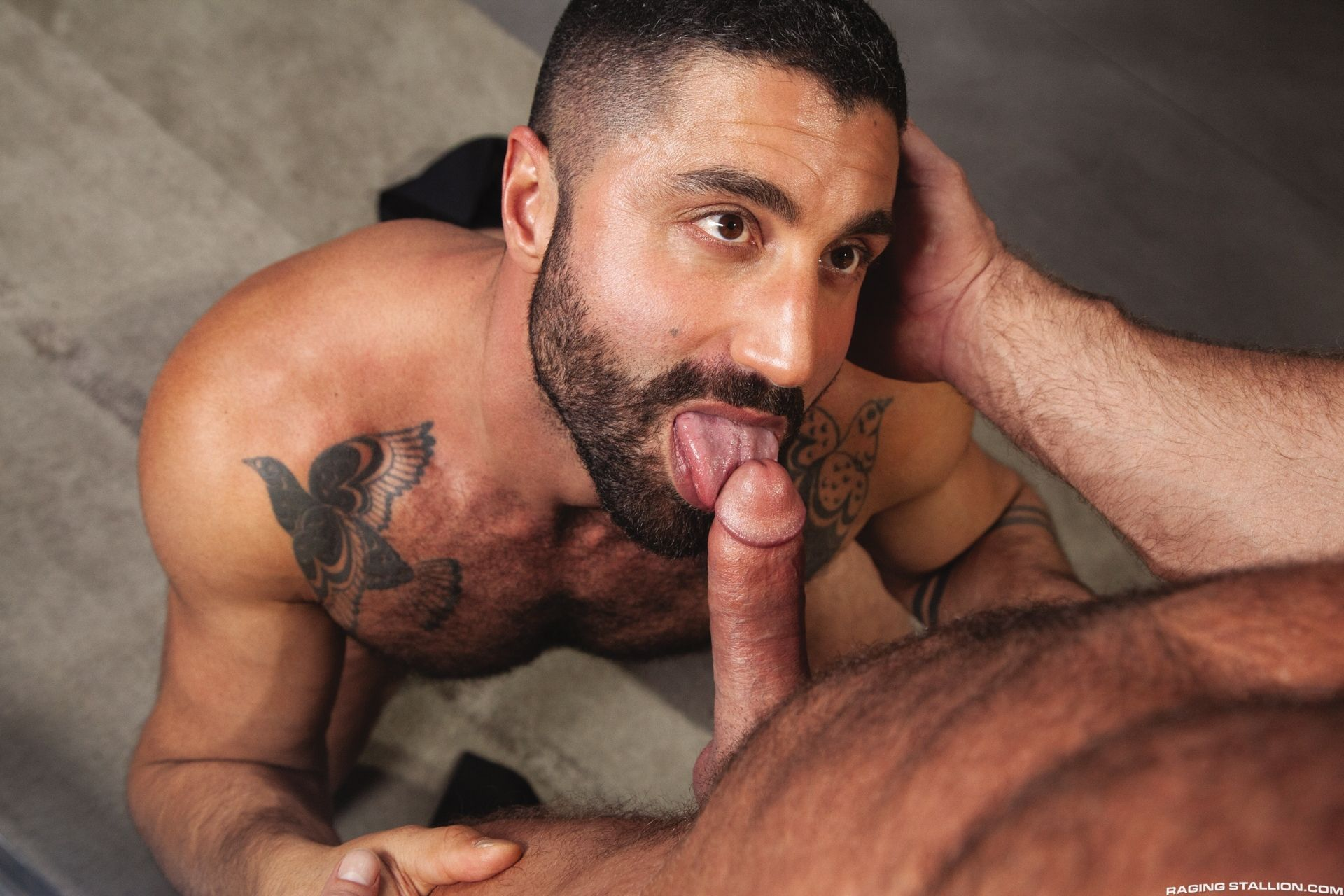 Actor Porno Sharok sharok and liam knox fuck each other