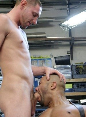 Wild Gay Jay Rising,Troy Sparks,